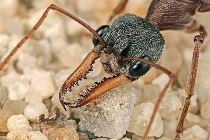 Miniature lives – identifying insects in your home or garden