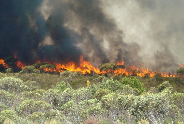 A large experimental fire in mallee-heath fuels of south-eastern South Australia under very high fire danger conditions.