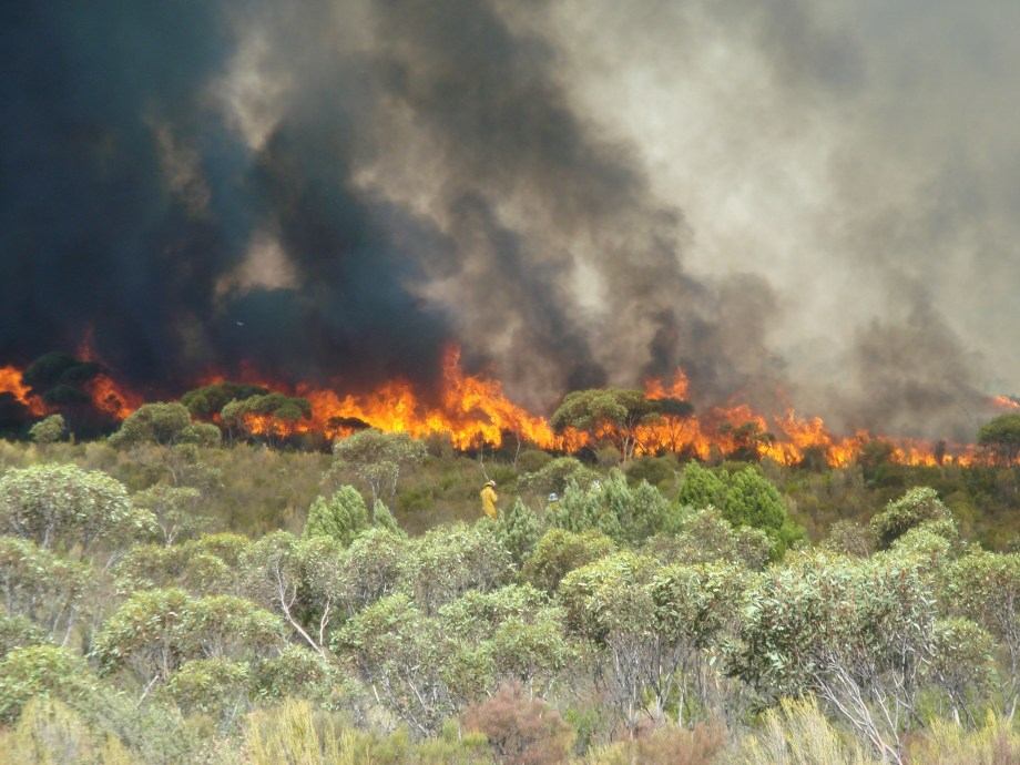Our scientists make observations during a large experimental fire in south-eastern South Australia.