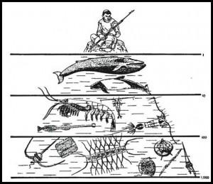 A Biotic Pyramid