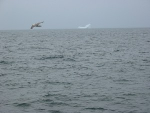 Iceberg en vue !