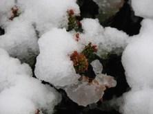2009-01-neige-marseille-goudes-09