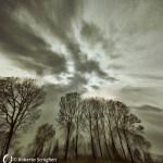 "Dantebus - ""Fantasy in the woods"" Roberta Scroglieri"
