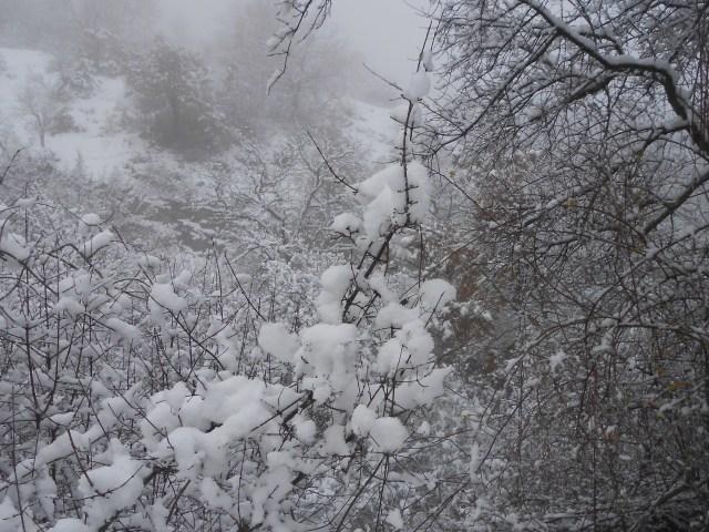 """Dantebus - """"Momenti invernali"""" Daniela Cesta"""