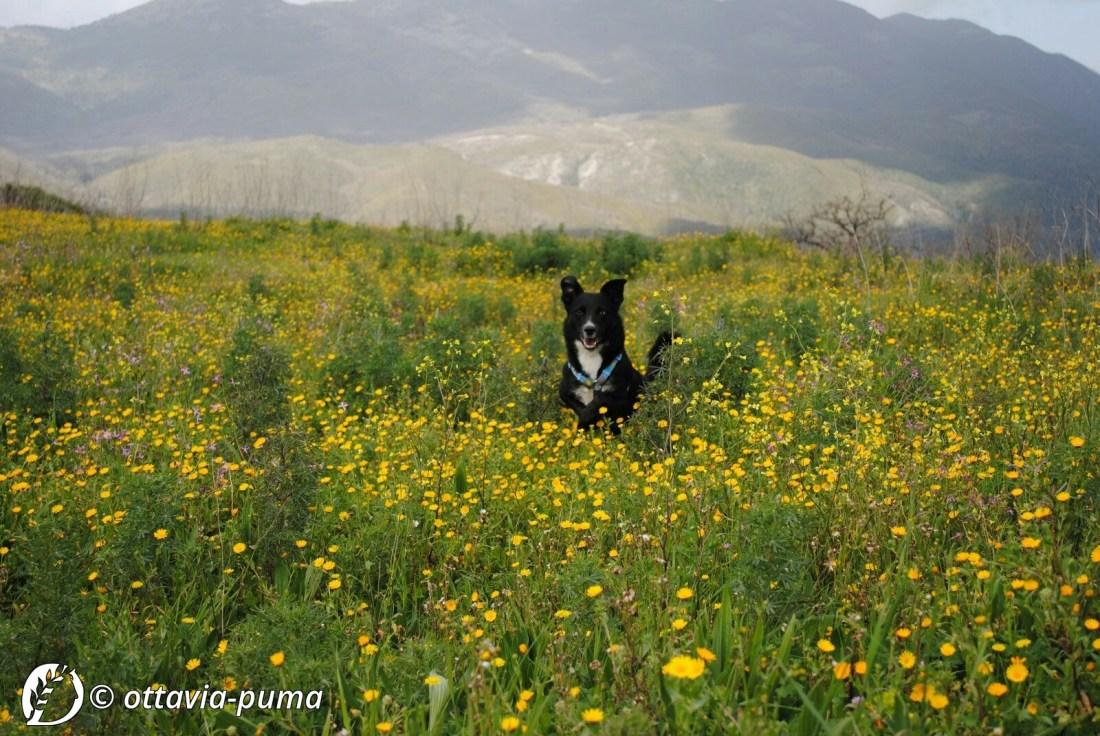 Dantebus - Ottavia Puma - Wild Dog