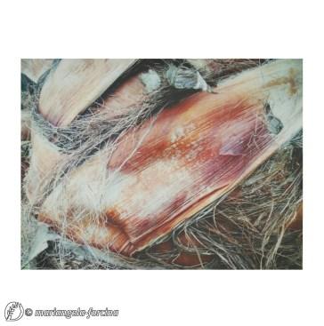 Dantebus - Mariangela Forcina - Natura Pittrice