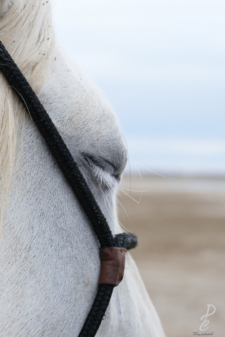 cheval yeux fermé mettre un titre aux photos