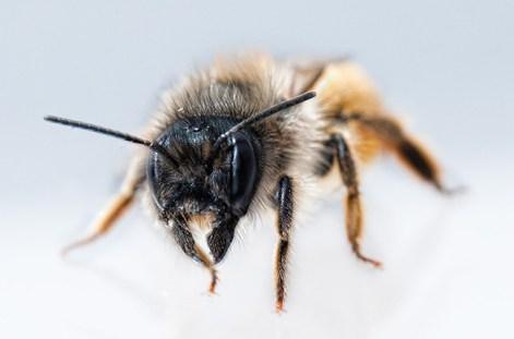 abeille-studio-650