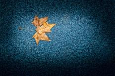feuille-d-automne