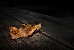 feuille-sombre