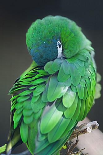 pero-vert