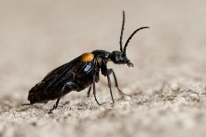 petit-scarabe-1000