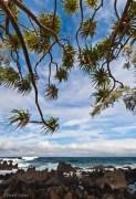 Coastline park, trees Ke'anae, HI