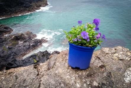 Flowers on mine ruins Crown Mine