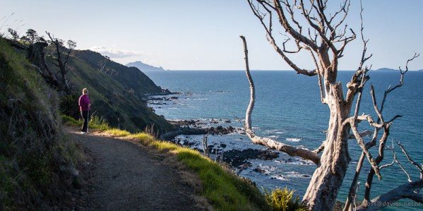 North along the Mangawhai Cliff Top Walkway