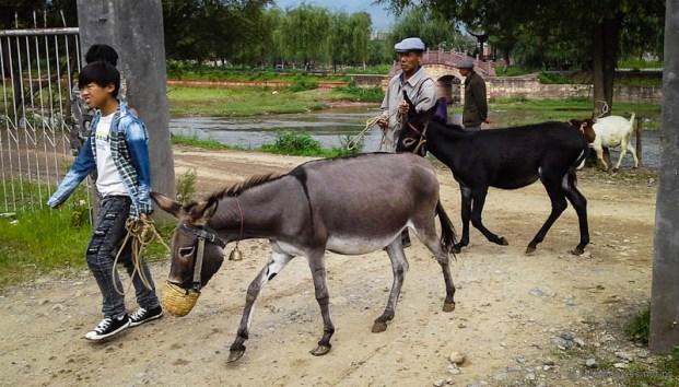 Livestock market Sideng Shaxi