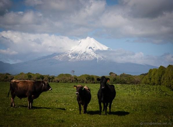 Mt Taranaki from Cape Egmont