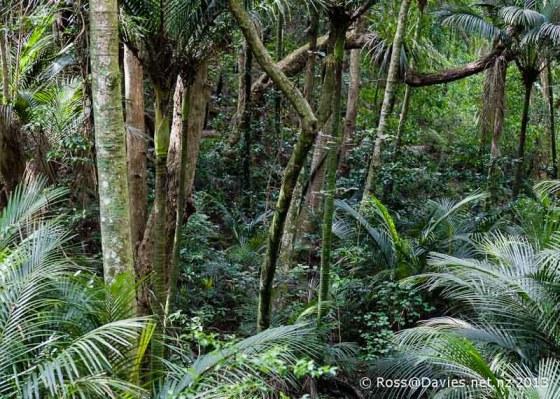 Tawharanui Regional Park