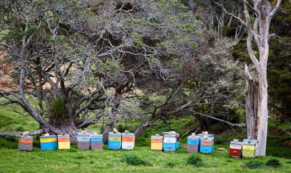 Beehives - Whananaki Walkway