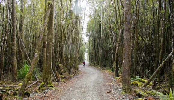 Forest section of Wilderness Trail near SH6