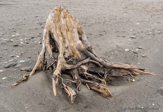 Driftwood on Okarito Beach