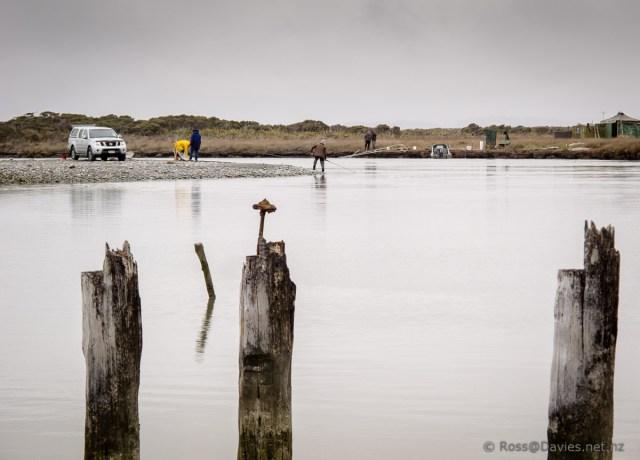 Old wharf piles and old whitebaiters at Okarito Lagoon