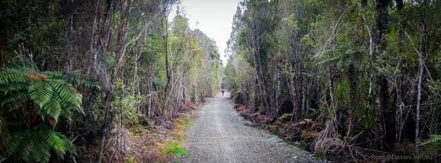 Another forest section of Wilderness Trail near SH6