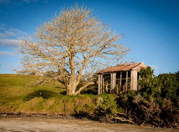 Bland Bay Whangaruru Harbour Coastal Coral Tree