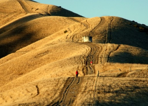 Wither Hills walking track