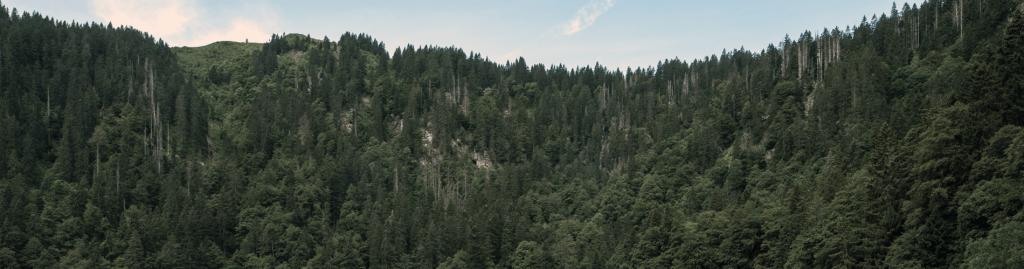 VisitGermany_Black-Forest_1900x500
