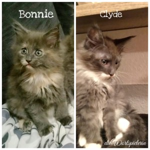 Bonnie & Clyde unsere Maine Coon Babys
