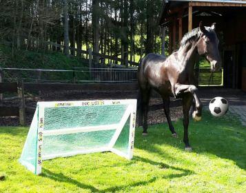 Ein Pferd wirbt für Inklusion im Reitsport