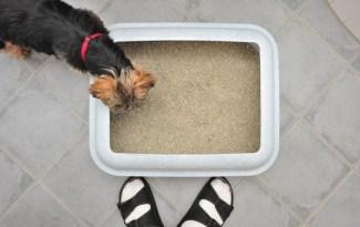 hond eet kattenpoep