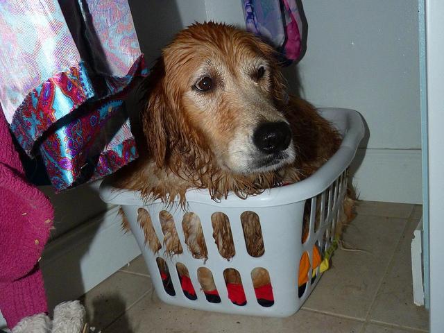 hond bang voor onweer