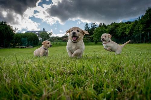 pups spelen