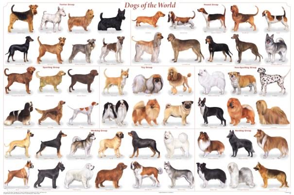 Honden van de wereld
