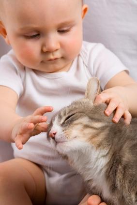 Baby op komst en kat
