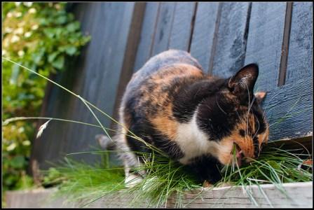 haarballen bij de kat