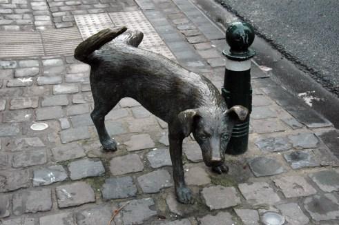 hond zindelijkheid