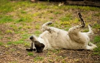 Epilepsie bij honden