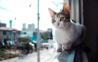 kat valt uit het raam