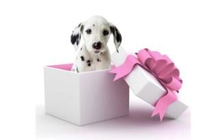 cadeau_chien_roseTitre