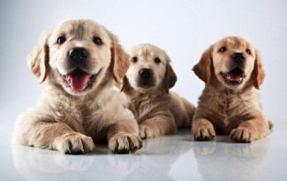 Trouver un nom de chien 2013