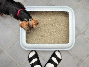 chien mange crotte de chat