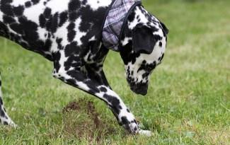 chien creuse trou jardin