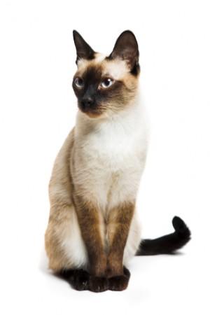 grandes photos de la chatte trou noir porno