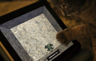 Chat jouant à l'iPad