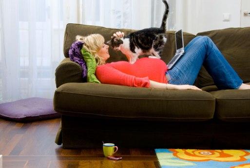 Enceinte et chat