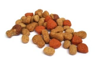 Combien de repas par jour chien