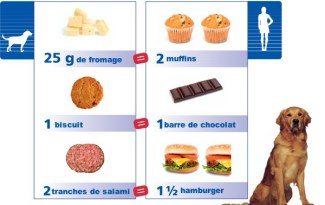 equivalence friandises chien